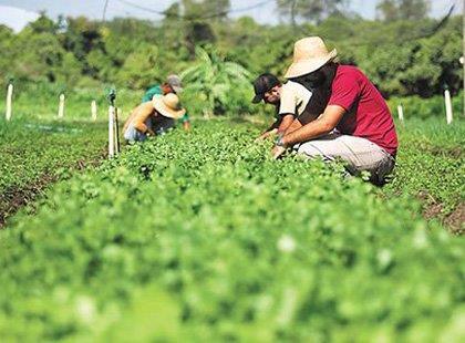 Ver cursos online em Agricultura