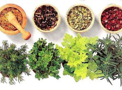 Cultivo e Uso de Plantas Medicinais